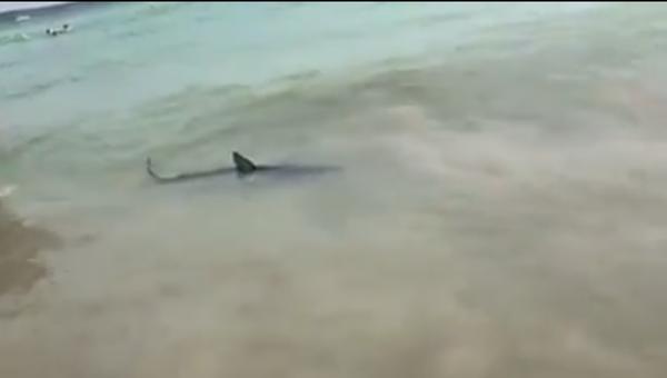 Акула, вызвавшая панику на Майорке