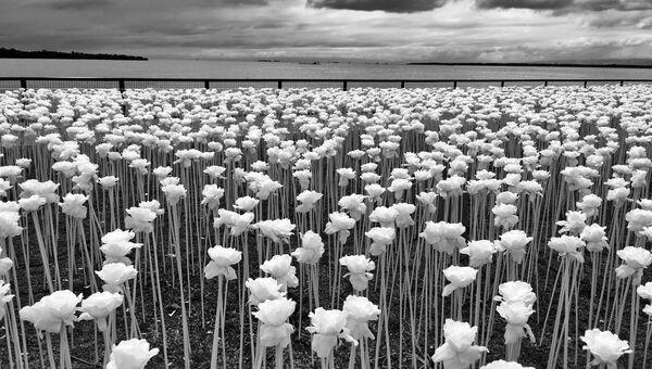Работа фотографа из Филиппин Sidney Po, занявшая 1-ое место в категории Цветы в iPhone Photography Awards 2017