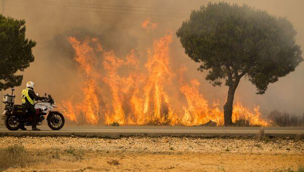 Лесной пожар в Испании. Архивное фото