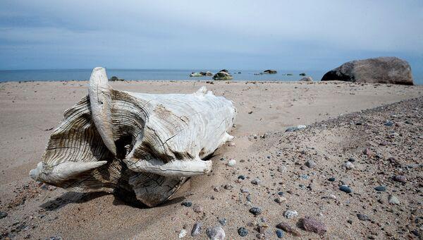 Песчаный пляж острова Большой Тютерс в конце XIX века был курортом Финляндии