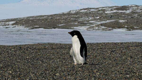 Пингвин на исследовательской станции в Антарктиде