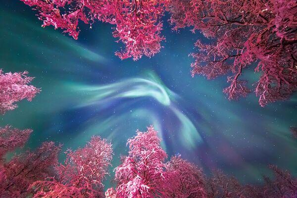 Работа фотографа Yulia Zhulikova Auroral Crown, вошедшая в шорт-лист Insight Astronomy Photographer of the Year 2017