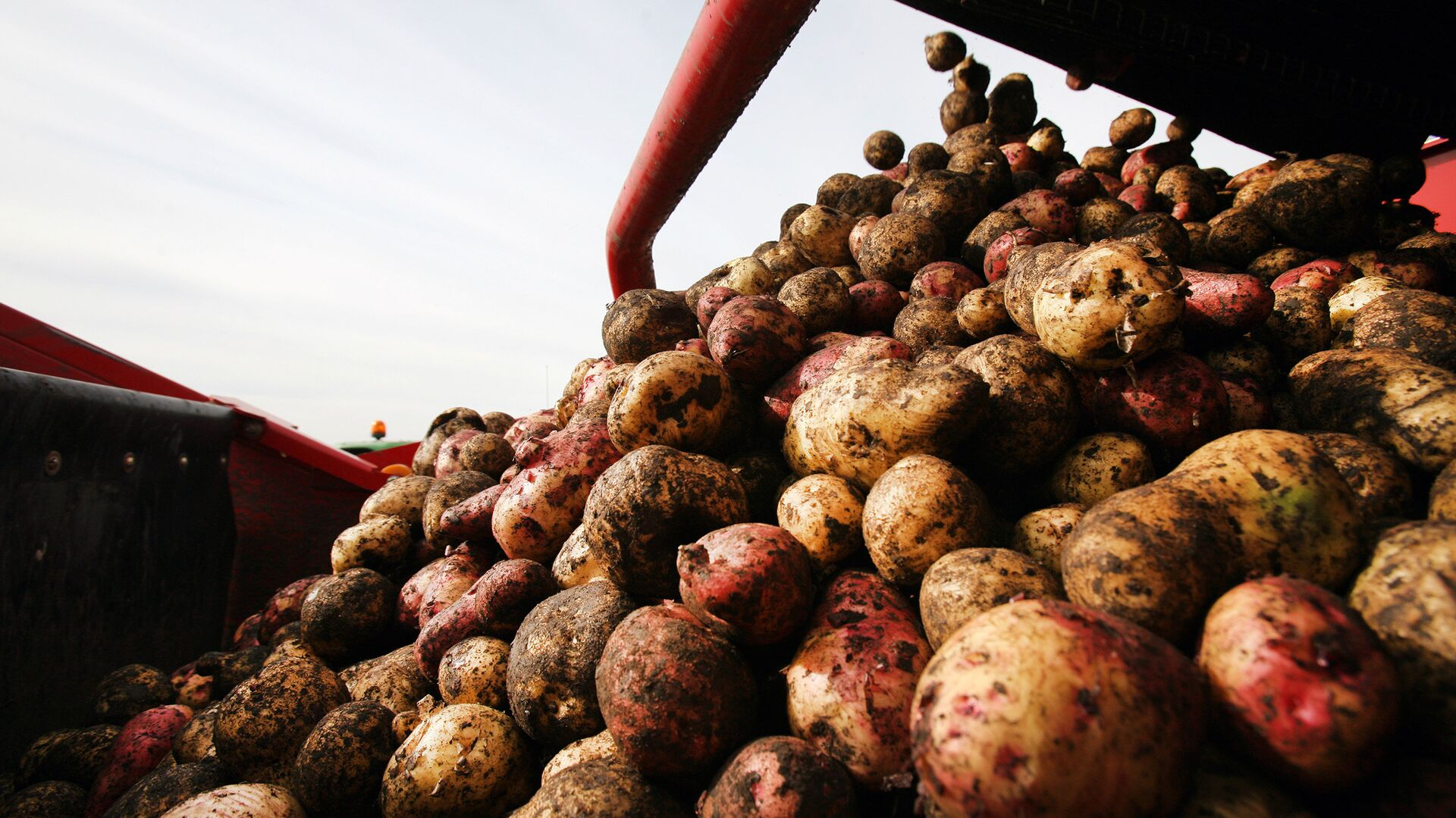 Уборка картофеля - РИА Новости, 1920, 22.01.2021