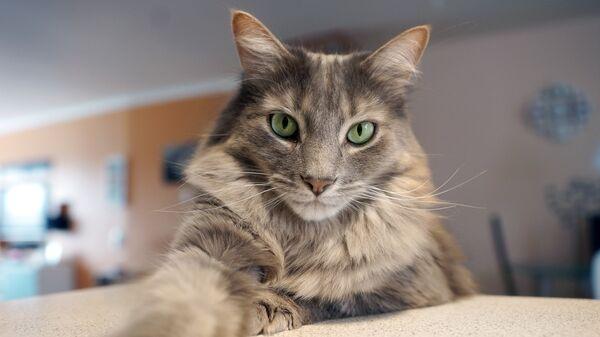 Картинки по запросу домашний кот