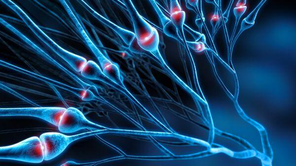 Ученые предложили способ восстановления нервной ткани
