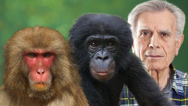 Макака, шимпанзе и человек