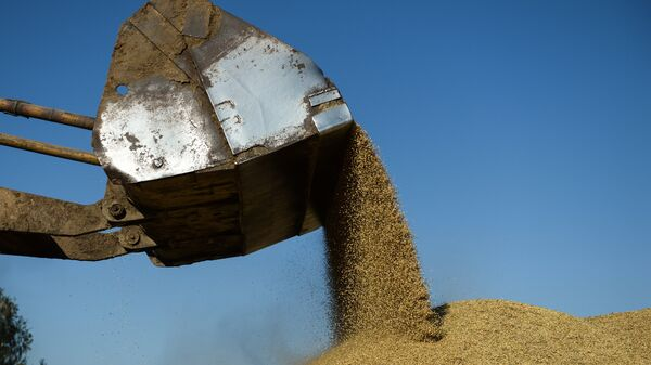 Зерновой ток на территории ЗАО Степное