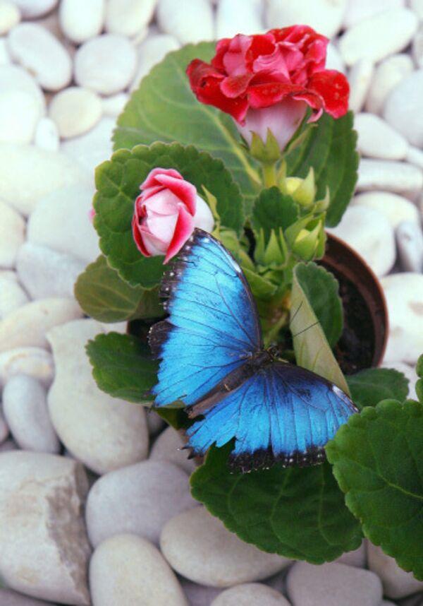 Бабочка. Архив