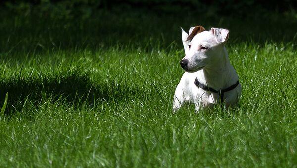 Собака в Измайловском Парке культуры и отдыха в Москве. Архивное фото