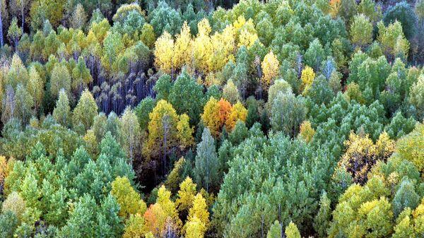 Деревья в Кировской области