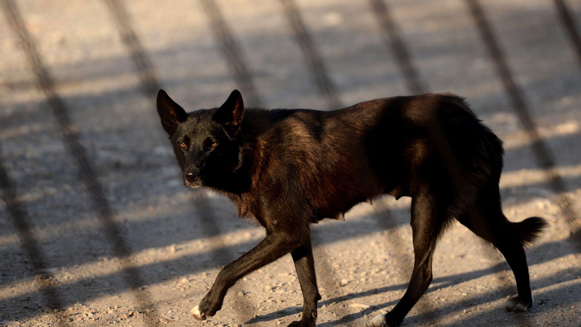 Бездомная собака - РИА Новости, 1920, 21.08.2021