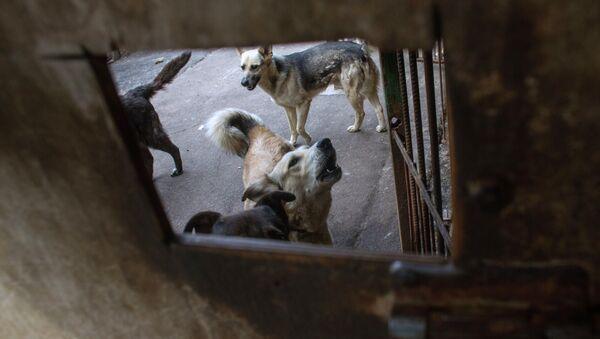 Собаки в приюте для бездомных животных в Москве
