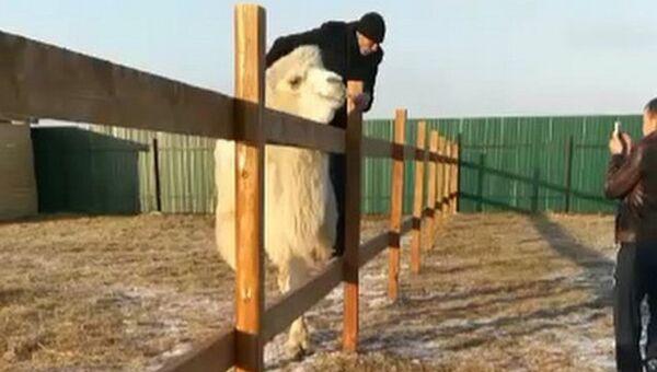 Двое посетителей напали на животных в зоопарке Чудесный в Приморье