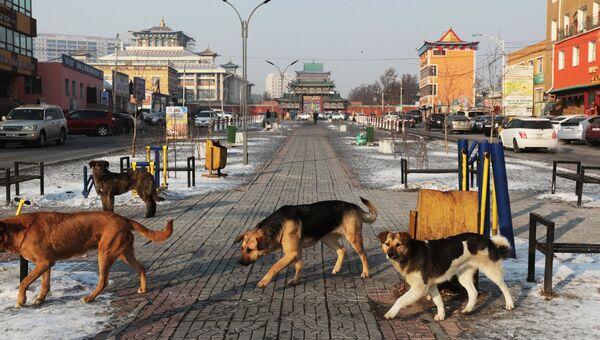 Бродячие собаки. Архивное фото