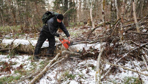 Расчистка леса инспектором в районе Филатовского кордона
