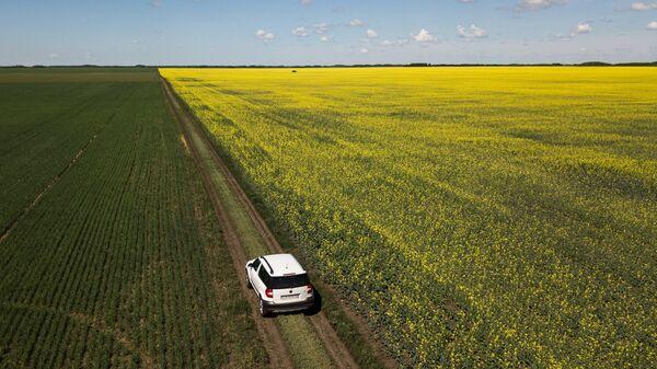 Цветущие поля в Омской области