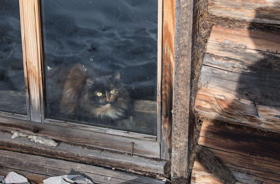Кот в доме Агафьи Лыковой