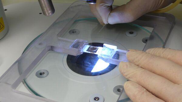 С помощью капилляра яйцеклетки переносят в стеклянный сэндвич с питательной средой