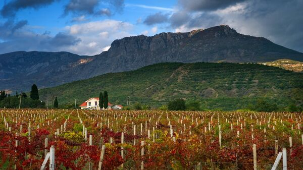 Виноградники в окрестностях села Нижняя Кутузовка в Крыму