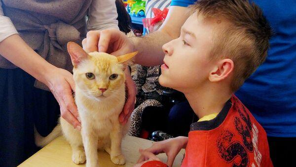 Фелинотерапевтами коты обычно работают недолго: один-два года