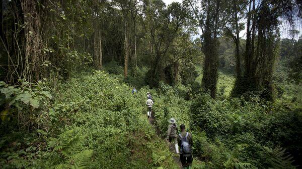 Туристы в джунглях. Северная Руанда