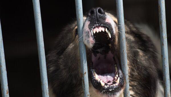 Собака в вольере. Архивное фото