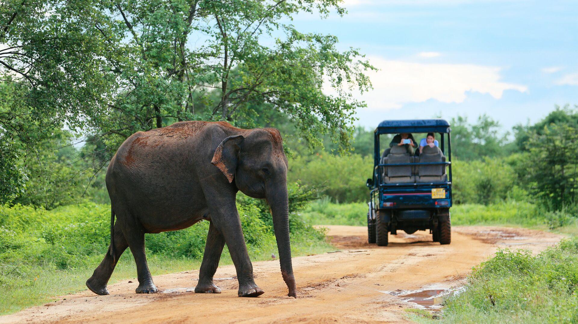 Слон на дороге в Шри-Ланке - РИА Новости, 1920, 13.05.2021