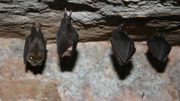 коронавирус летучих мышей
