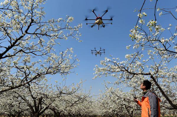 Дроны для опыления деревьев в Цанчжоу, Китай