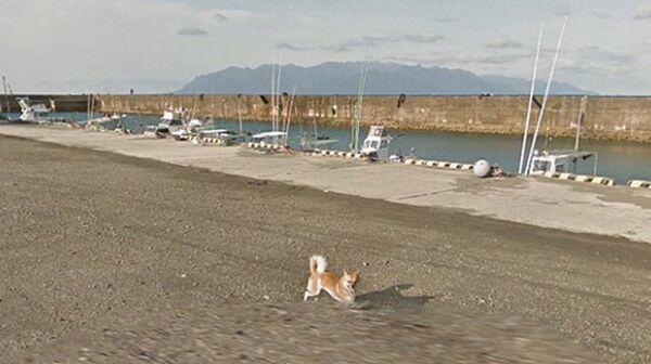 Снимок экрана с ресурса Google Maps с изображением собаки, преследующий автомобиль Google Street View в Кумаге в префектуре Кагосима в Японии