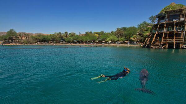 Купание с дельфинами в Эйлате