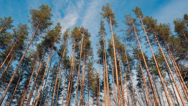 Несколько тысяч гектаров кемеровских лесов стали частной собственностью