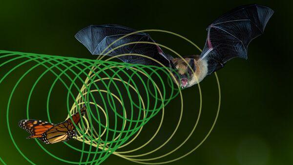 Летучие мыши и некоторые виды насекомых при движении ориентируются на магнитное поле Земли