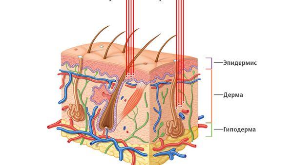 УФ-лучи В задевают только верхние слои кожи и причиненные ими повреждения обычно не имеют далеко идущих последствий. УФ-лучи А проникают в глубокие слои эпидермиса и дермы и могут повреждать биологические молекулы.