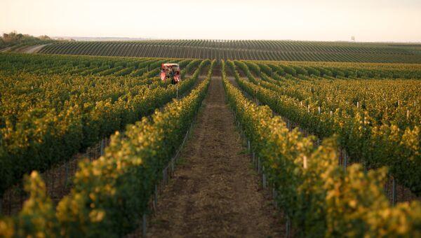 Винодельческое хозяйство Alma Valley в Крыму