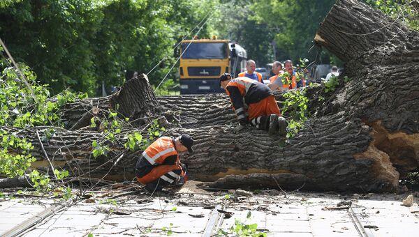 Устранение последствий падения дерева в Москве. 30 мая 2018