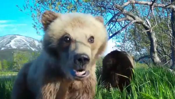 Видеоселфи медведицы с медвежонком в Южно-Камчастком заказнике. 27 июня 2018