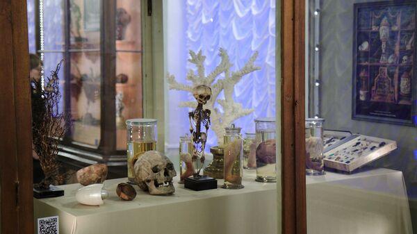 Экспонаты Музея антропологии и этнографии им. Петра Великого (Кунсткамера)
