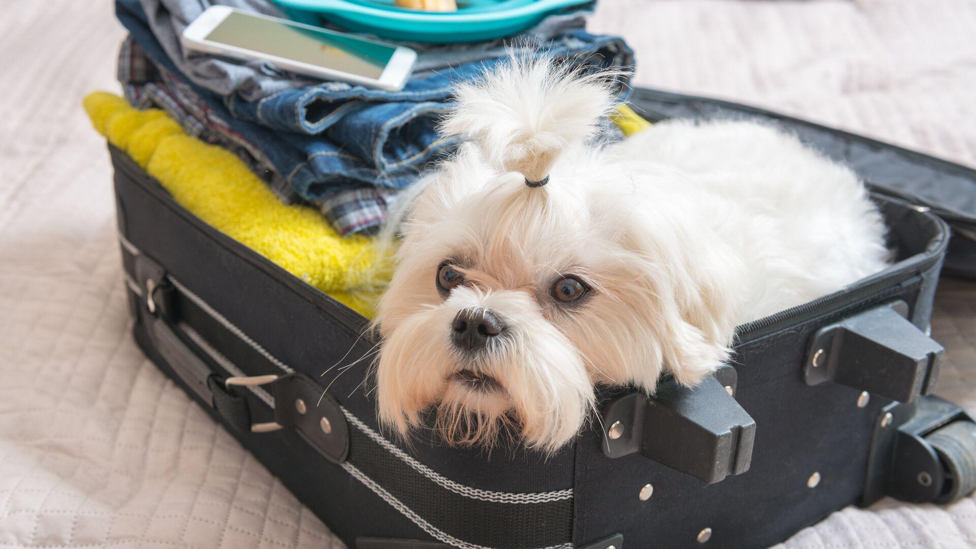 Кинолог рассказал, с кем можно оставить собаку на новогодние праздники
