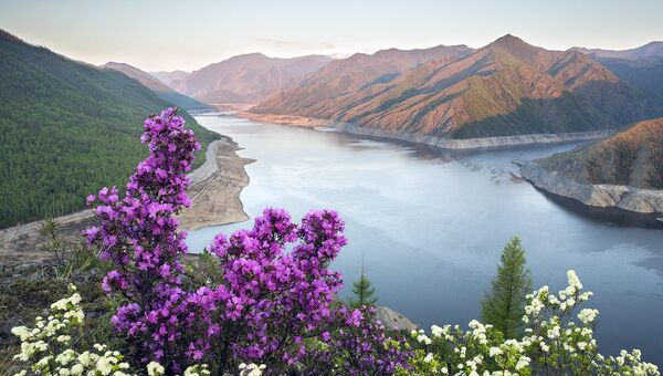 В Саяно-Шушенском заповеднике обнаружили пять новых видов растений