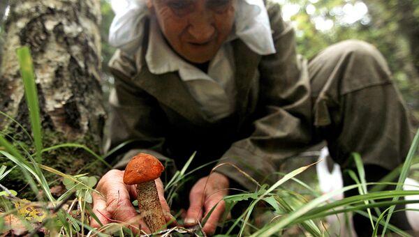 Каждую находку надо внимательно рассматривать, чтобы случайно не попался несъедобный или ядовитый гриб