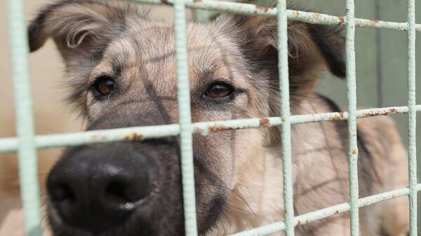Собака в приюте для бездомных собак