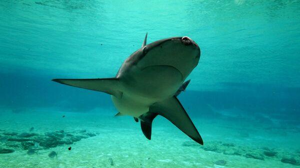 Акула у побережья в Австралии