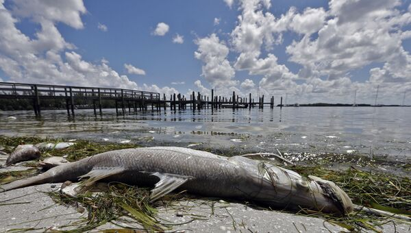 Мертвая рыба на пляже во Флориде, США