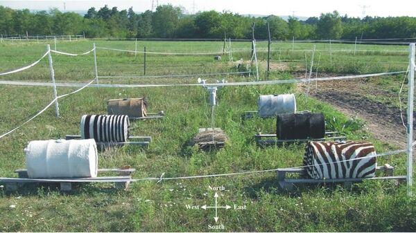 Экспериментальное стадо зебр и лошадей