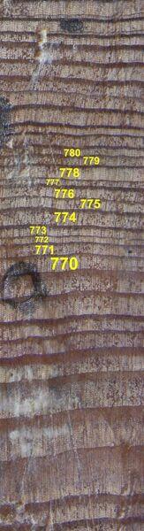 Образец ископаемой древесины с Полярного Урала с кольцами, относящимися к 770 - 780 гг. н.э.