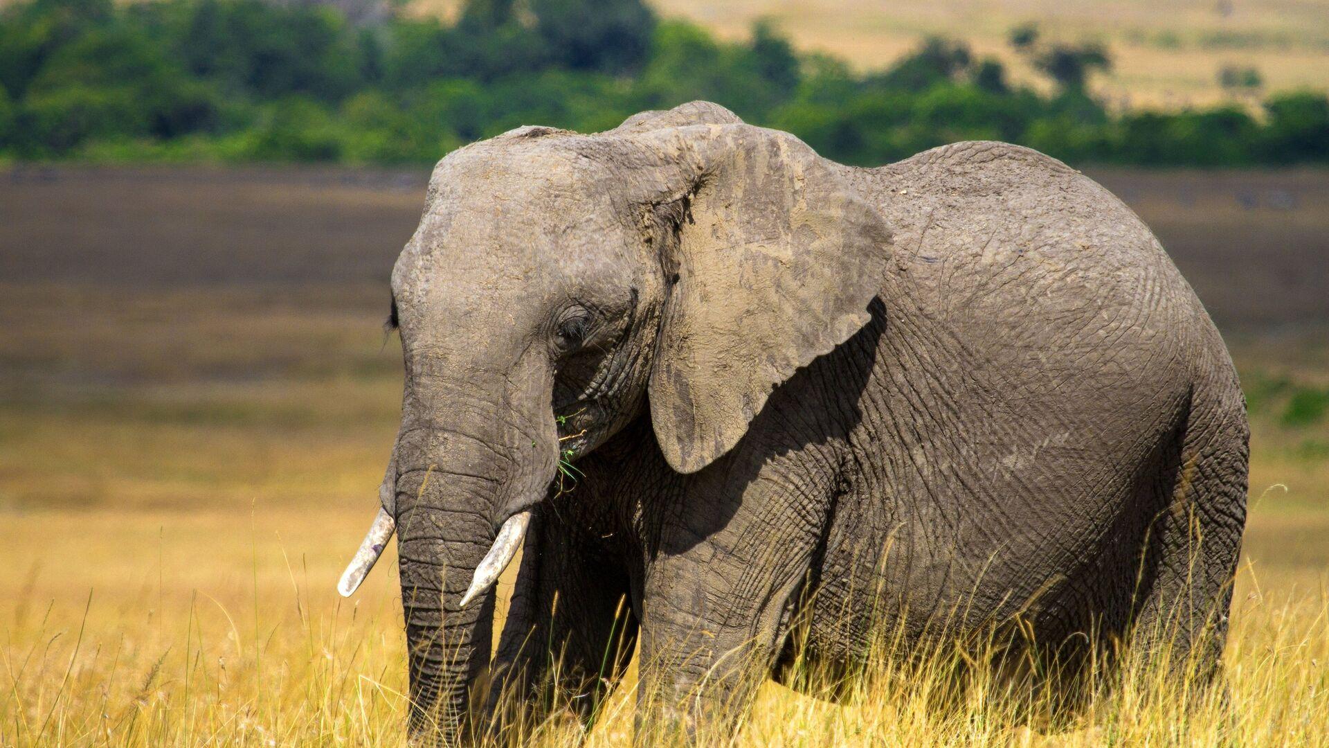 В ЮАР слон заблокировал автодорогу в заповеднике - РИА Новости, 29.09.2020