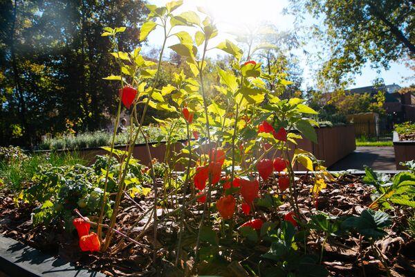 Тактильный сад Шестое чувство