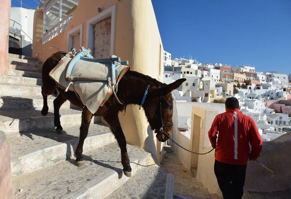 Мужчина с ослом на одной из улиц города Ия на острове Санторини