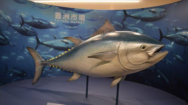 Нааукционе вТокио продали тунца зарекордные $3,1 млн